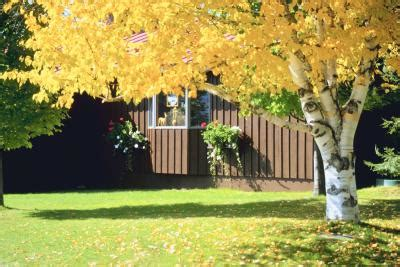 shade trees for small backyards information on shade trees for small yards home guides sf gate