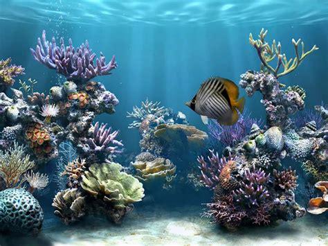 imagenes de fondo de pantalla bonito pez bonito fondos de pantalla gratis
