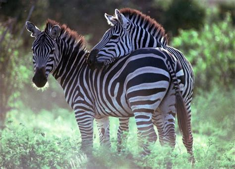 What Garden Zone Do I Live In - zebra the garden of eaden