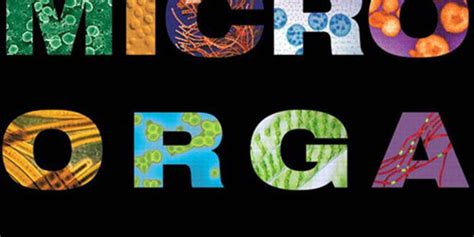 Human Biology 14th Edition brock biology of microorganisms 14th edition vetbooks