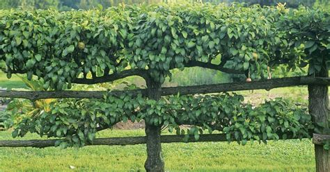 backyard inspiration pragmatic sustainability backyard inspiration