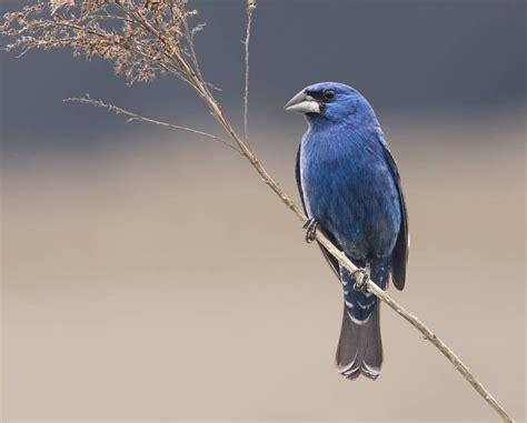 blue birds weneedfun