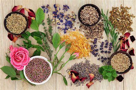 Herbal De Nature 5 herbal remedies to help you through winter mnn