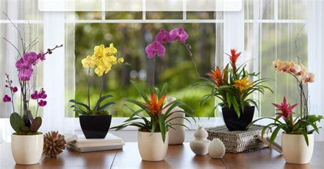 jenis tanaman hias bunga  mempercantik rumah