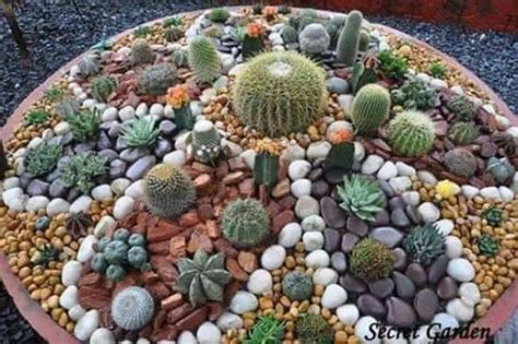 cactus rock garden painted cactus rock garden easy