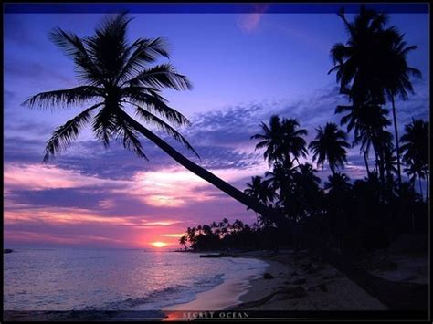 beautiful beach and palms wallpapers for your desktop noupe
