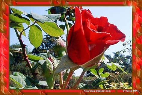 un jardin de rosas rojas imagenes de amor imagenes rosas rojas para google
