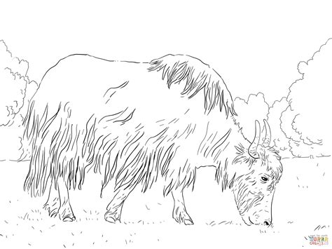 coloring page yak yak free colouring pages