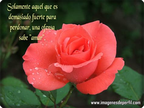 imagenes de amor con flores tumblr 1000 images about flores a ti on pinterest red roses