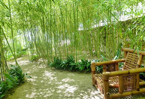 backyard bamboo garden bamboo garden la mouissone
