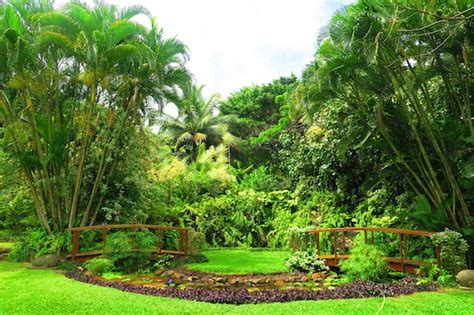 Nui Botanical Gardens by The Independent Traveler S Guide To Rarotonga X Days In Y