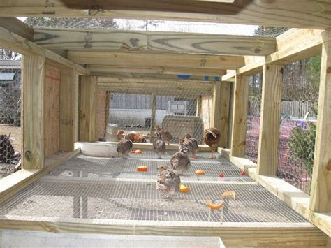 Quail Housing Plans 80 Best Images About Quail On Chicken Coop