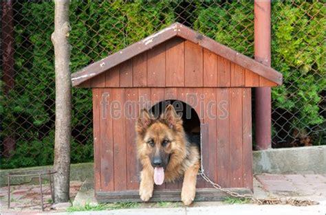 german shepherd dog house german shepherd dog houses home mansion