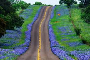 Florists In Tx Hit The Road And View The Blue Bluebonnets Tour