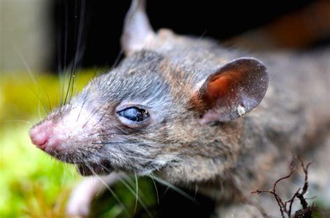 Minyak Ikan Hiu Tikus minyak goreng bekas menumpuk jangan buang manfaatkan