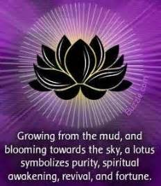 Significance Of The Lotus Flower Lotus Flower Meaning
