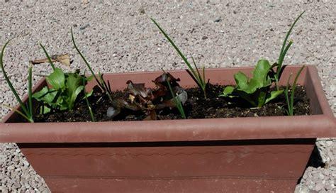 lade agro curso de huerto ecol 243 gico en balc 243 n y terraza escuela de