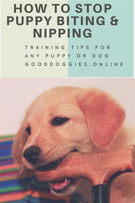how to get your puppy to stop biting you oltre 25 fantastiche idee su suggerimenti di ammaestramento cucciolo su