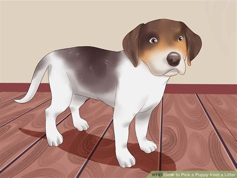 picking a puppy from a litter how to a puppy from a litter 15 steps with pictures