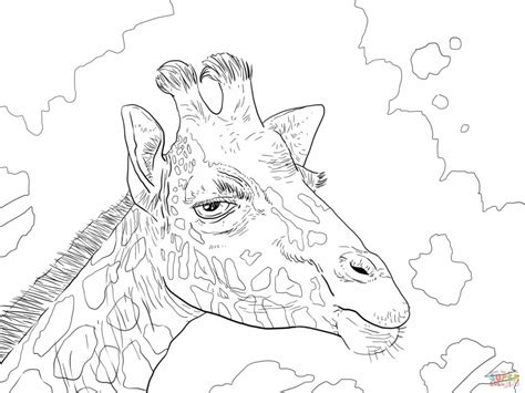 preschool coloring pages giraffe coloring pages giraffes coloring pages free coloring