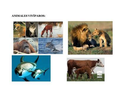 imagenes de animales viviparos animales viv 237 paros y ov 237 paros