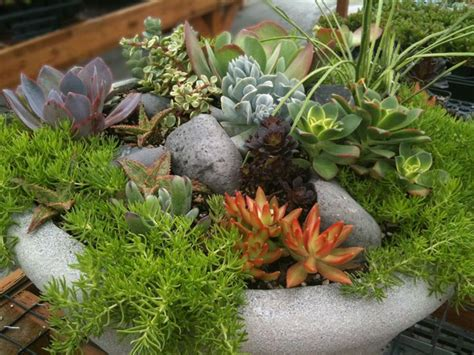 How To Propagate Succulents Sunset - 180 best images about succulent window boxes containers