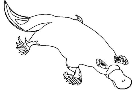 Coloring Pages Duck Billed Platypus Coloring Pages Platypus Coloring Page