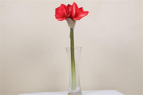 Amaryl Sprei cathby trading arum lilies