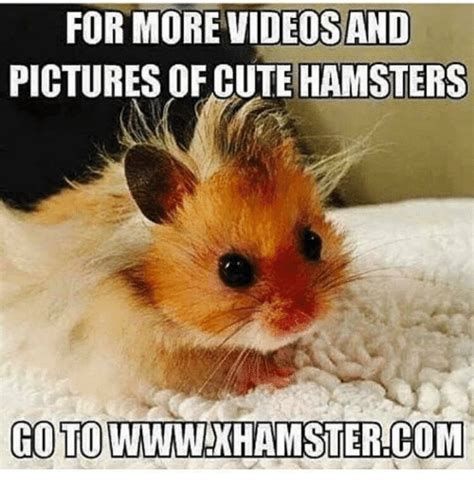 Pictures For Memes - for more videosand pictures of cute hamsters goto wwwink