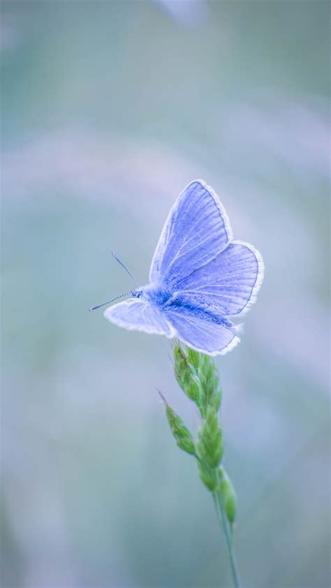 download fantastic butterfly screensaver animated blue butterfly wallpaper