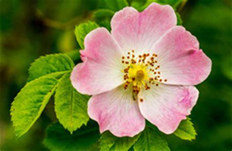 fiori di bach roma corso sui fiori di bach roma