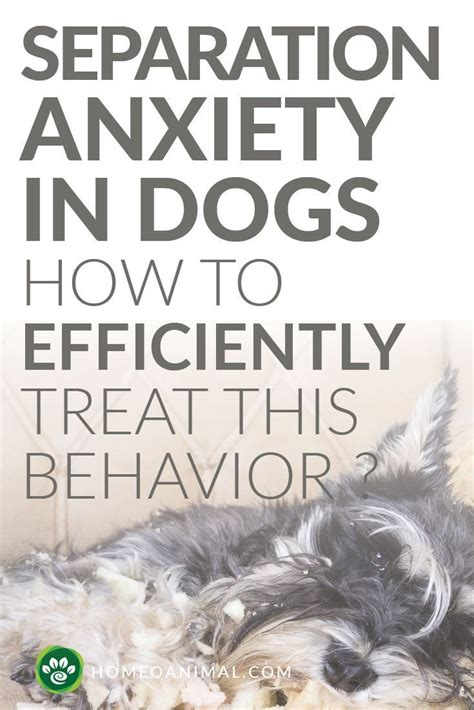 how to treat anxiety in dogs separation anxiety in dogs how to efficiently treat this behavior anxiety