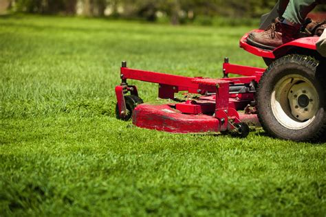 biggest lawn care mistake  cutting grass  short