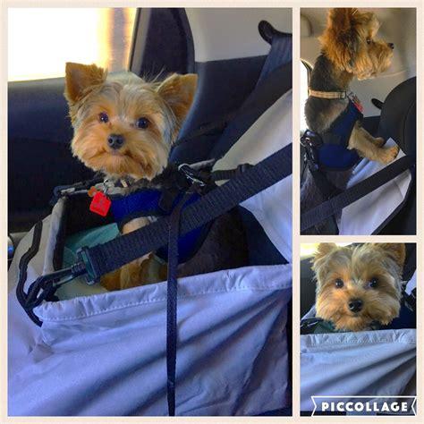 yorkie car seat puppy attire korrectkritterscom
