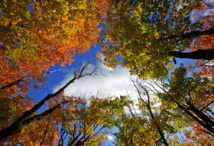 minnesota fall colors fall colors larsmont cottages shore minnesota