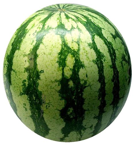 Water Melon acuspa is watermelon for your acuspa