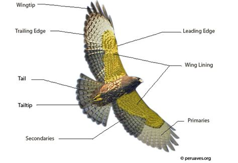 parts of a bird flight and feathers avian report