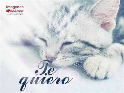 imagenes buenas noches de gatitos 8 im 225 genes de gatitos tiernos con lindas frases de amor
