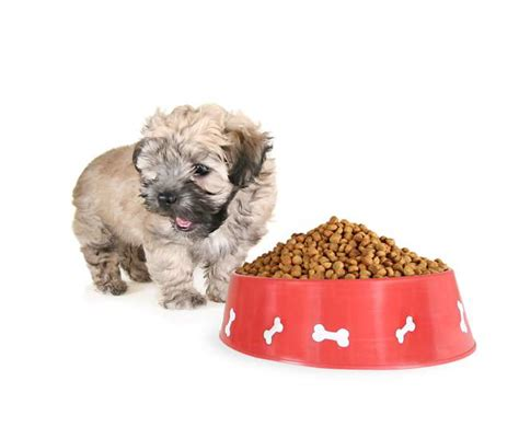 shih tzu puppy food guide best food for shih tzu reviews a buyers guide march 2018