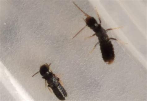 termites whats  bug