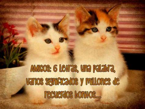 imagenes tiernas de gatitos con frases de amor imagenes de gatos tiernos con mensajes de amor