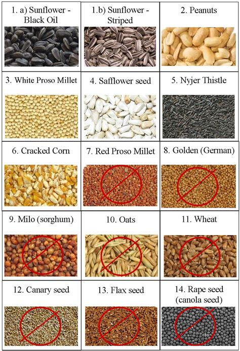 wild birds unlimited can wild birds eat chia or flax seed