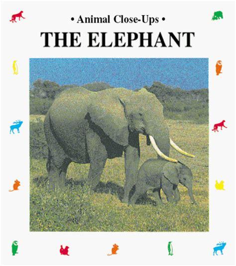 elephant picture books wxicof elephant books
