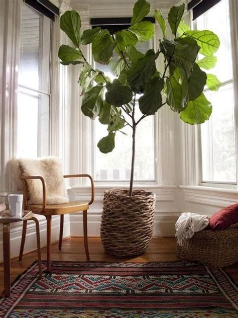 7 stylish ways to use indoor plants in your home s d 233 cor
