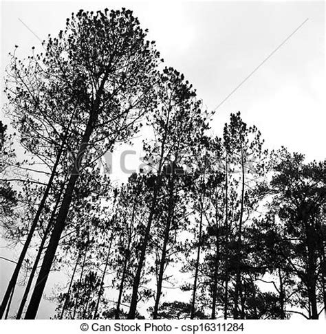 pictures of abstract black and white image of tree tops in