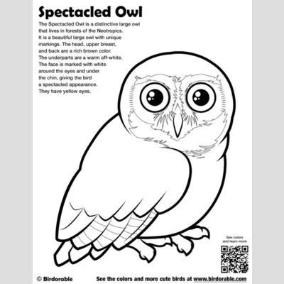 tawny owl coloring page tawny frogmouth page coloring pages