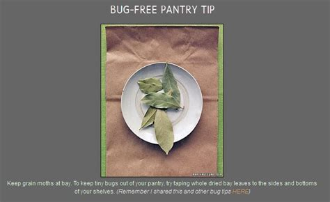 rid your pantry of bugs getting rid of pests pinterest