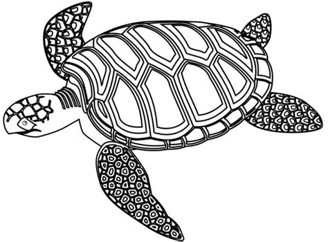 hard turtle coloring pages sea turtle coloring pages hard coloring pages