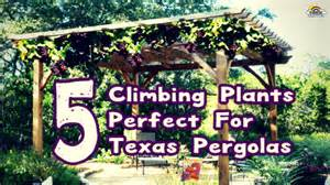 Garden Oasis Pergola by 5 Climbing Plants That Are Perfect For Texas Pergolas