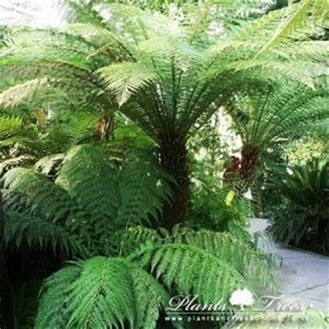 fern frost back yard biology 1000 ideas about palm trees landscaping on pinterest